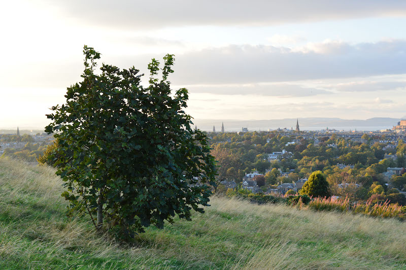 blackford hill4