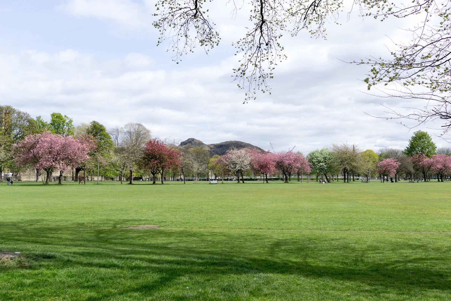 Cherry Blossom Meadows Edinburgh