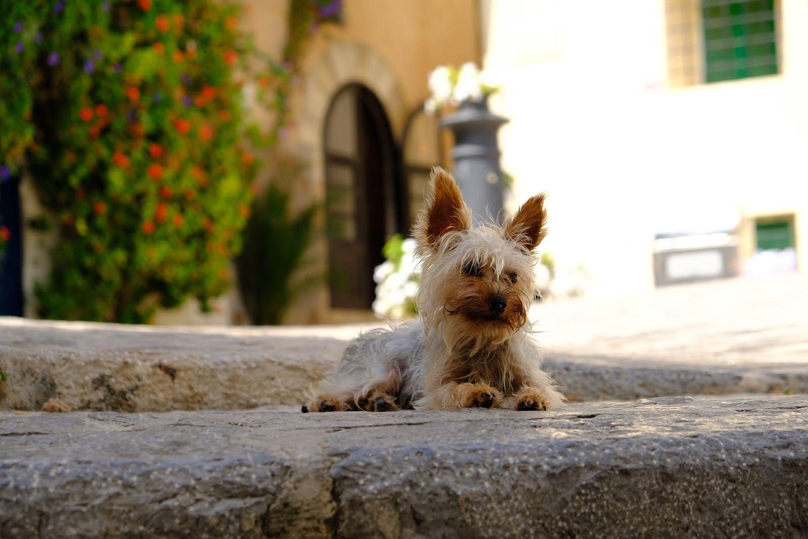 Dog in Dalt Vila, Ibiza